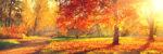 Fall Getaway Oakwood Resort